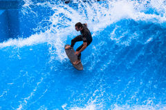 Wave Pool Action Surfer Carving. Wave pool surfer practices his turns on the fast standing wave for the next competition.Photo image looking down on the athlete Stock Image