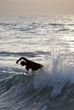 Wave rider Stock Photography