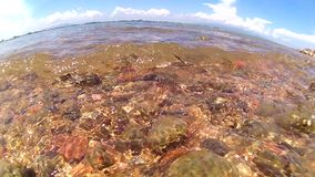 Wave on rock beach stock video footage