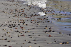 Wave sea pebble beach Stock Images