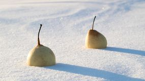Free Wave Snow As A Result Of Blizzards In This Snow Lie Two Chinese Pears Stock Images - 117159534