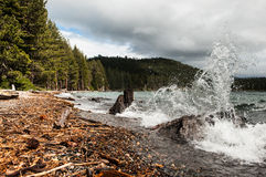 Wave splashes against tree trunk on a lake Royalty Free Stock Images