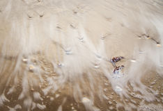 Wave washing over shells and seaweed Royalty Free Stock Photos