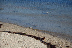 Wavelet on the beach. Wavelet crushing on a beach in Brittany Royalty Free Stock Photo
