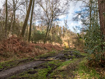 Wavendon Milton Keynes de madeira - coníferas e floresta decíduo Fotografia de Stock
