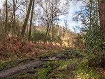 Wavendon Wood Milton Keynes - barrträd och lövfällande skogsmark Arkivbild