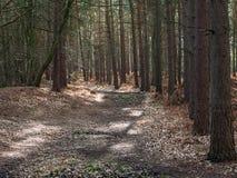 Wavendon Wood Milton Keynes - träd fodrad vandringsled Royaltyfri Bild