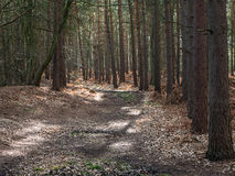 Wavendon Wood Milton Keynes  - Tree lined footpath Royalty Free Stock Image