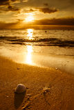 Waves approaching sea shell on beach during sunset Royalty Free Stock Photos