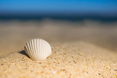 Waves approaching sea shells lying on sand during sunset. Waves sea shells lying on sand during sunset royalty free stock image