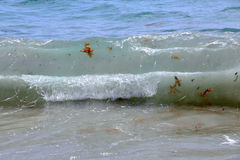 Waves containing seaweed Stock Photography