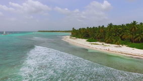 Waves on the beach and a large palm rainforest view quadrocopters stock video