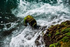The waves beat on the moss on the shore stock image