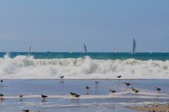 Waves birds sailboats Royalty Free Stock Images