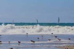 Waves birds sailboats Royalty Free Stock Images