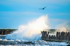 Waves breaking. Sea waves breaking crashing to old wooden pier, bird flight Royalty Free Stock Images
