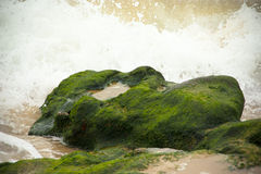 Waves breaking on the stone covered with seaweed Royalty Free Stock Images