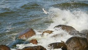 Waves breaks about rocks on the sea. Small waves and round stones. stock video footage