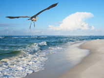 Waves Breck on White Sand Beach as Blue Heron Flies Over Stock Images
