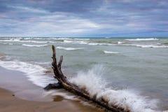 Waves Crashing Against Driftwood Royalty Free Stock Image
