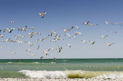 Seagulls With Beach Waves Royalty Free Stock Image