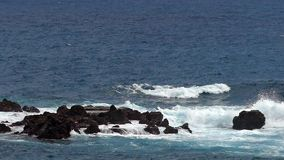 Waves crashing on lava rocks. Two play speed. Slow motion. Waves crashing on lava rocks on the coast of the island of La Palma. Two play speed. Slow motion stock video