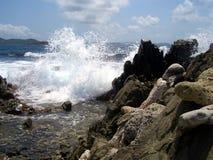 Waves crashing on rocky beach. Frothing waves crash on a rocky Caribbean beach on St. John in the US Virgin Islands Stock Photos