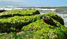Maui Coastline. Waves crashing on Rugged Maui coastline with mountains in the background stock photos