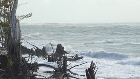 Waves crashing into stumps and driftwood on cloudy beach, 4K stock video footage