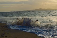 Waves and drops at Bounty Island Fiji. Sunset chill mood at Bounty Island Fiji in the pacific ocean. Drops when waves hit a root in the water royalty free stock image