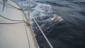 Waves on the edge of the yacht. The nose of a sailing yacht on the waves at dawn in the Black Sea stock video footage