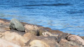 waves för blått vatten lager videofilmer
