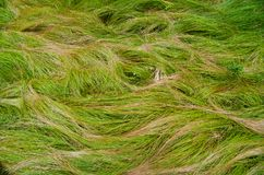 Waves of grass. Forest grass shaped by the wind into the wave like forms Stock Photos