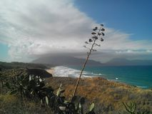 Waves in the Gulf of Castellammare and in the foreground typical Sicilian plants stock images