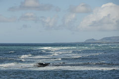 Waves on Hawaii beach panorama. On windy day Royalty Free Stock Image