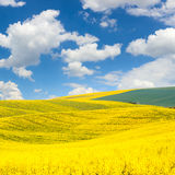 Waves hills  landscape of colorful fields and beautiful blue sky Stock Image