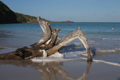 Waves hit driftwood Royalty Free Stock Photo