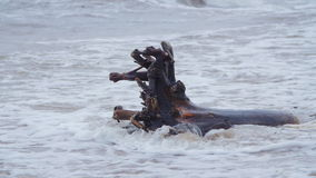 Waves hitting a washed ashore tree stump during a blizzard. In slow motion stock footage
