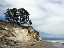 Waves lap on the beach next to cliff with tree on top Royalty Free Stock Images