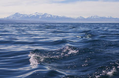 Waves on the mountain lake. Waves on the blue mountain lake Titicaca royalty free stock photo