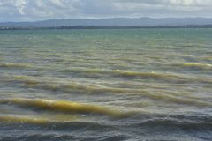 Waves in murky harbor. Waves of muddy water on surface of harbor with coastline in background Stock Photo