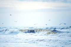Waves at the north sea in Denmark royalty free stock photography