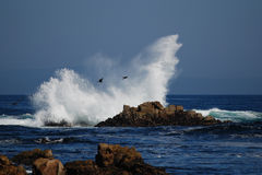 Waves. Photo taken on American during 17 miles driving,  big waves along the coast of pacific Royalty Free Stock Images