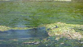 Waves on pond. With seaweed stock video footage