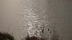 Waves on pond. With sun reflection and birds stock footage