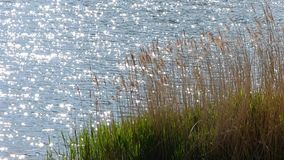 Waves on pond. With sun reflections stock footage