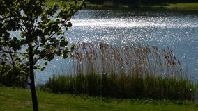 Waves on pond. Water video stock video footage