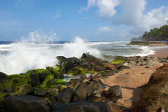 Waves pounding rocks on a beach. Coconut palms on  a rock strewn beach pounded by rough waves Stock Image