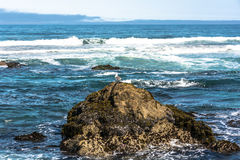 The waves, the rocks and the kelp, Fort Bragg Stock Photos