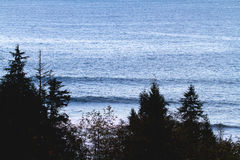 Waves Rolling Into Pacific Northwest. Two waves rolling into a surf spot in Washington USA. The water is cold and the coast is fringed with pine trees Royalty Free Stock Images